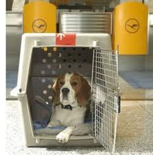 """dog in airport sized carrier"""